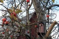 Obstbaum im winter