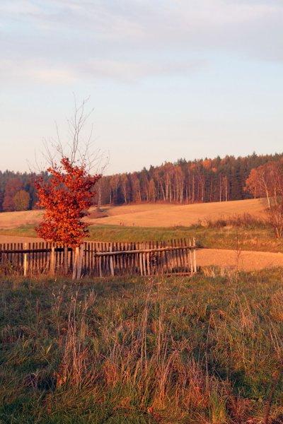 Sonnuntergang mit Blick auf den Wald